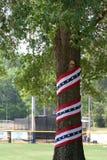 patriotyczny drzewo Obraz Stock