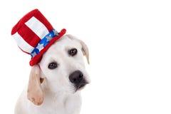 Patriotyczny szczeniaka pies zdjęcia stock