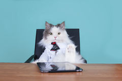 Patron de chat dans le bureau Photo stock