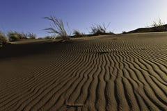 Patronen in de duinen Stock Foto's