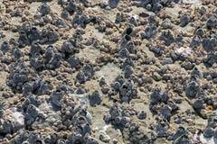 Patronen en Texturen van Rots op Eendenmosselenachtergrond die worden behandeld royalty-vrije stock afbeelding