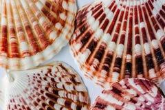 Patronen op shells Stock Afbeeldingen