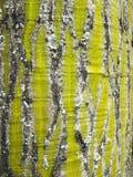 Patronen in Pseudobombax-de schors van de septenatumboom Royalty-vrije Stock Fotografie