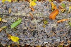 Patronen van de herfst Stock Foto