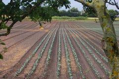 Patronen van landbouw Stock Foto's