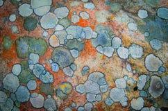 Patronen van mos op een steen royalty-vrije stock afbeeldingen