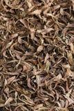 Patroon door Droge Dode bladerentextuur wordt gevormd die als achtergrond Royalty-vrije Stock Foto