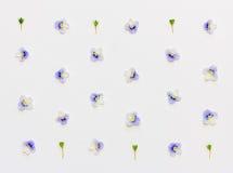 Patroon met blauwe bloembloemblaadjes en groene bladeren op een witte achtergrond Stock Foto
