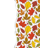 Patroon met de herfstbladeren Stock Afbeelding