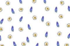Patroon met kamille en blauwe wildflowers op wit Royalty-vrije Stock Foto