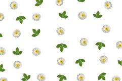 Patroon met kamille en groene bladeren op wit Royalty-vrije Stock Foto's