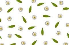 Patroon met kamille en groene bladeren op witte achtergrond Royalty-vrije Stock Foto