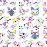 Patroon met katten Royalty-vrije Stock Foto's
