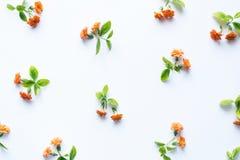 Patroon met kleurrijke bloemen Royalty-vrije Stock Foto