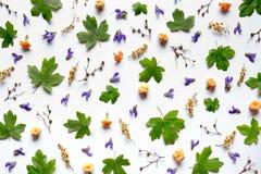 Patroon met kleurrijke bloemen Stock Fotografie