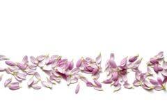 Patroon met Roze Bloemblaadjes op Witte Achtergrond Royalty-vrije Stock Foto
