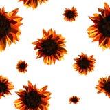 Patroon met zonnebloemen stock illustratie