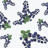 Patroon met zwarte bes Stock Afbeelding