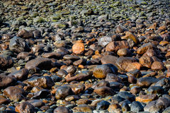 Patroon, textuur of achtergrond die van natte stenen op een strand liggen Stock Foto