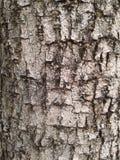 Patroon van boomstam Stock Fotografie