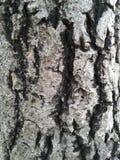 Patroon van boomstam Stock Afbeelding