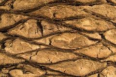 Patroon van boomstam van de palm Stock Foto
