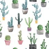 Patroon van cactus en succulents geïsoleerd op witte achtergrond Stock Foto