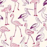 Patroon van de de beeldverhaalpelikanen en flamingo's Stock Afbeeldingen