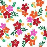 Patroon van de Hibiscus Stock Afbeeldingen
