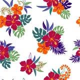 Patroon van de Hibiscus Stock Foto's