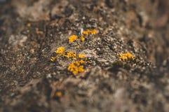 Patroon van van de korstmosmos en paddestoel het groeien op een schors van een boom in bos stock foto's