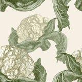 Patroon van de rijpe bloemkool Stock Afbeeldingen