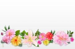 Patroon van de Zomer Roze Bloemen en Groene Bladeren op Licht wordt gemaakt dat Royalty-vrije Stock Foto