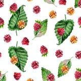 Patroon van framboos geschilderde waterverf Fruit naadloos patroon voor menu en desserts, restaurants en koffie Royalty-vrije Stock Foto's