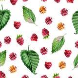 Patroon van framboos geschilderde waterverf Fruit naadloos patroon voor menu en desserts, restaurants en koffie Royalty-vrije Stock Fotografie