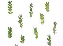 Patroon van groene bladeren Royalty-vrije Stock Foto