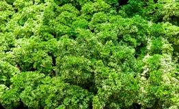 Patroon van groene bladeren Stock Foto