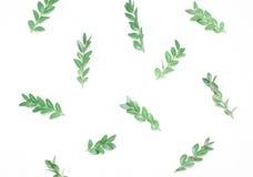 Patroon van groene bladeren Type van vlakte Royalty-vrije Stock Afbeeldingen