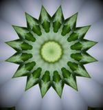 patroon van groene bloem Stock Fotografie