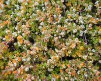 Patroon van Kleine Groene Installatie, Achtergrond Royalty-vrije Stock Foto