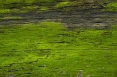 Patroon van mos op oud hout Stock Foto