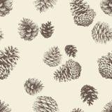 Patroon van pinecones Stock Afbeeldingen