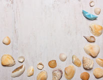Patroon van shells op een witte achtergrond, hoogste mening,  Stock Afbeelding