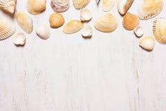 Patroon van shells op een witte achtergrond, hoogste mening Royalty-vrije Stock Fotografie