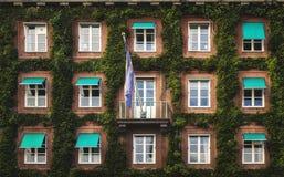 Patroon van vensters die met groene klimop worden gescheiden stock afbeeldingen