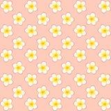 Patroon van witte jasmijnbloem met geel centrum met schaduw op roze achtergrond stock illustratie