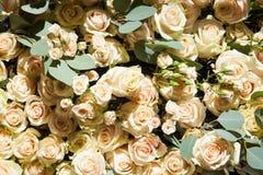 Patroon van witte rozen De achtergrond van de bloem stock afbeelding