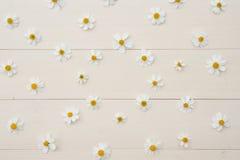 Patroon van witte Spaanse naaldbloemen Royalty-vrije Stock Afbeelding