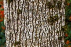 Patroon voor Achtergrond of textuur Grijze boomschors stock foto's