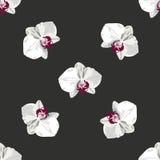 Patroonhand getrokken orchidee Stock Afbeeldingen